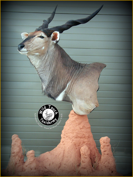 IMPORT/EX | Wild Touch Taxidermy